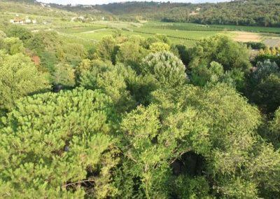 alberi e verde